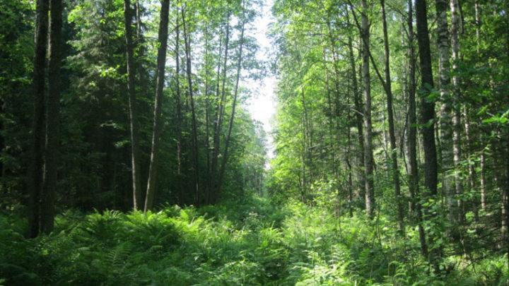Лебедань — природный лесомелиоративный заказник
