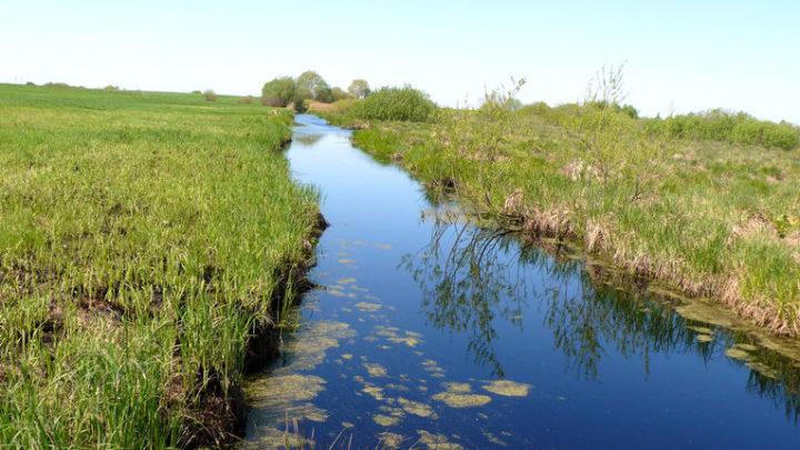Болото Березовое — комплексный памятник природы
