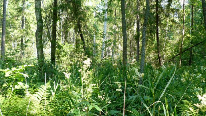 Болото Карасьяр — комплексный памятник природы