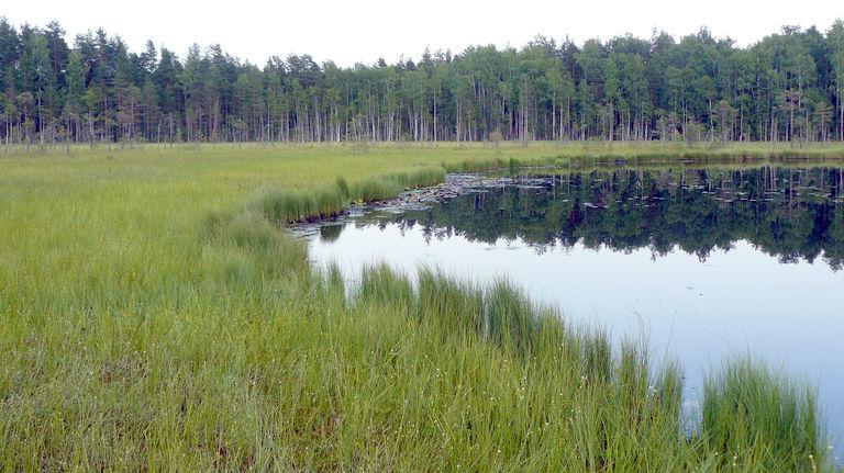 Болото Подвесное — комплексный памятник природы