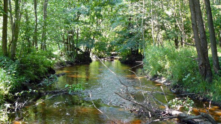Река Шуйка — зоологический памятник природы