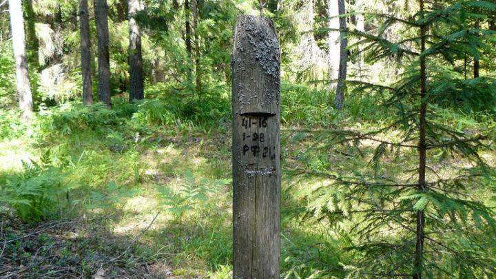 Реликтовые леса (Кедровник) — ботанический памятник природы