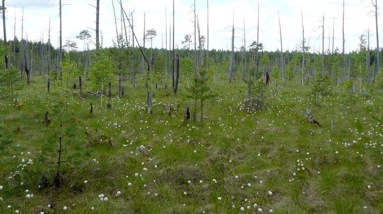 Тыр-болото — комплексный памятник природы